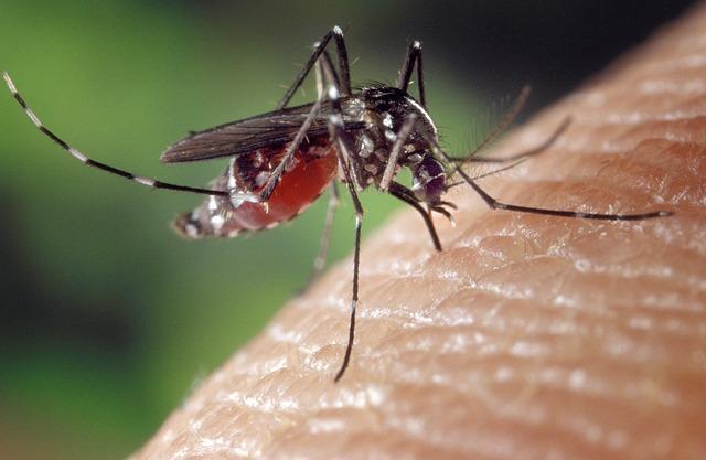 Muggen in uitstekende doen